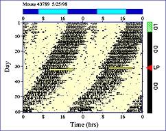サーカディアンリズム計測解析(ClockLab)